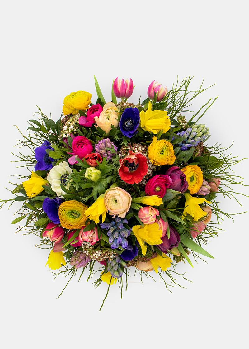 Farbenfrohes Frühlingserwachen_Top