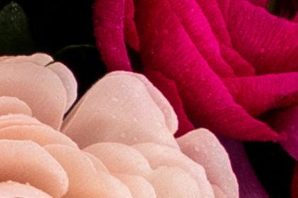 rosa-lila
